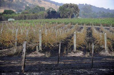 SOWINE_sticks_Vineyards