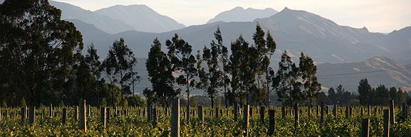 SOWINE_NZ_Chardonnay