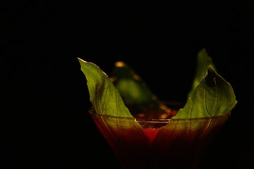 SOWINE_cocktail_mixologie2