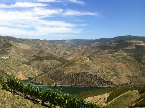 SOWINE_DOURO_3