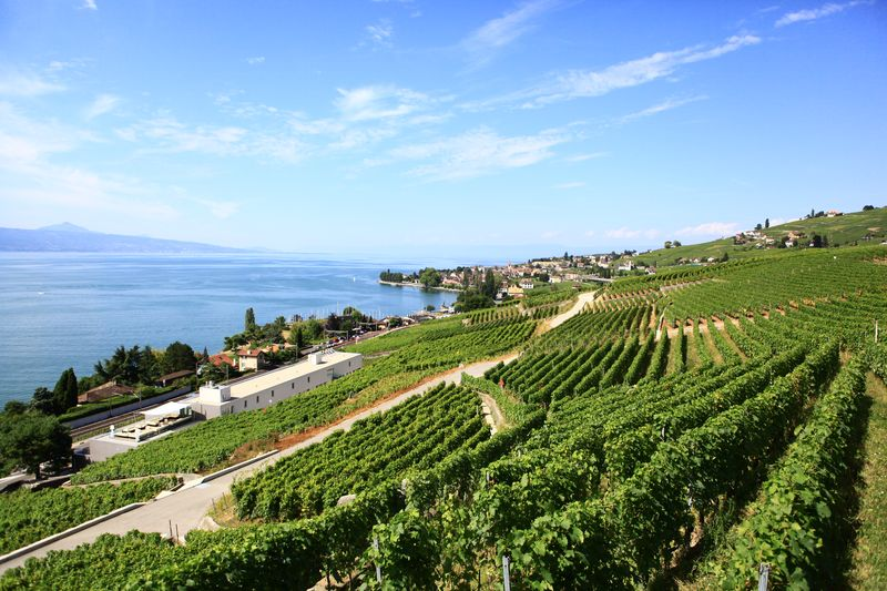 SOWINE_Lavaux_5