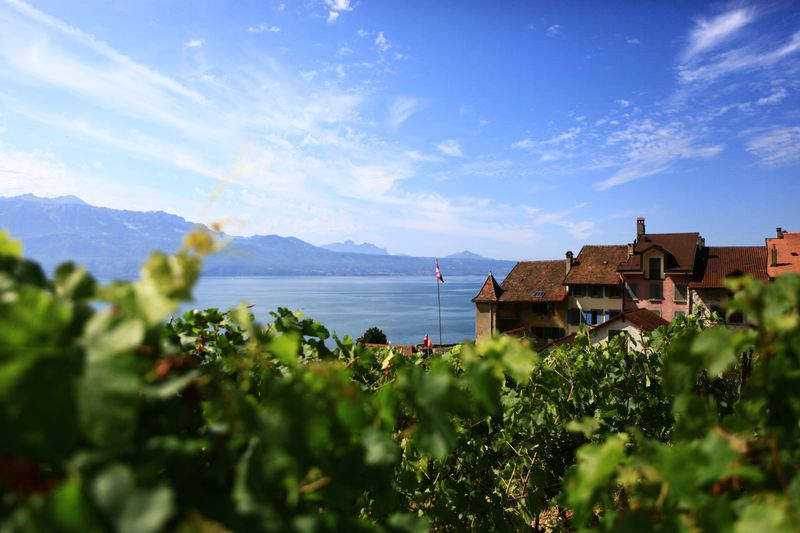 SOWINE_Lavaux_3